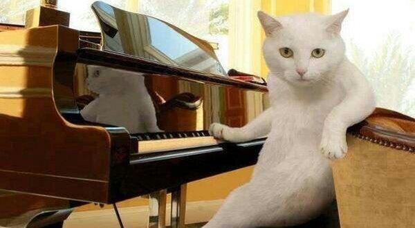 ネコ ピアノ 演奏 前衛的に関連した画像-01