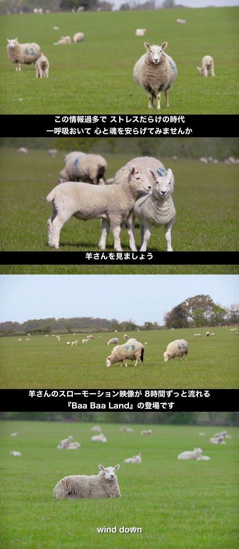 羊 映画 スローモーションに関連した画像-03