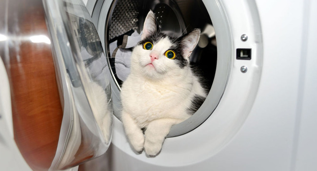 猫 洗濯機 重症に関連した画像-01