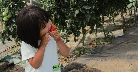 北海道 保育園 野菜 泥棒に関連した画像-01