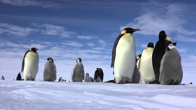 ペンギン 水族館 ショー 酷い カオスに関連した画像-01