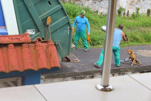 清掃車 犬に関連した画像-05