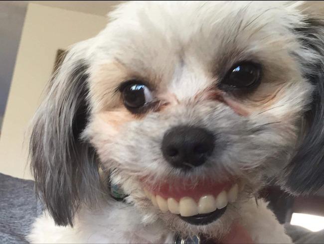 入れ歯 飼い犬 昼寝に関連した画像-04