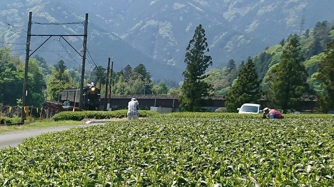 撮り鉄 やらかす 茶摘み 茶畑に関連した画像-02