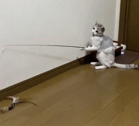 猫 猫じゃらし 一人遊びに関連した画像-06