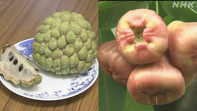 中国 台湾 果物 輸入停止 嫌がらせに関連した画像-03