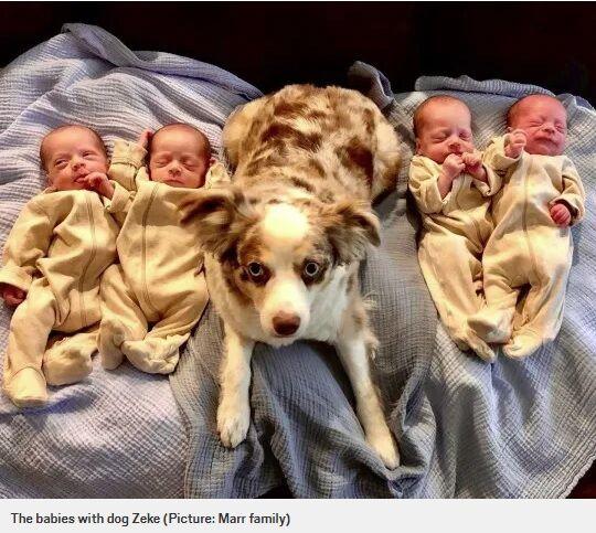 一卵性 4つ子 テキサス州 自然妊娠 出産に関連した画像-05