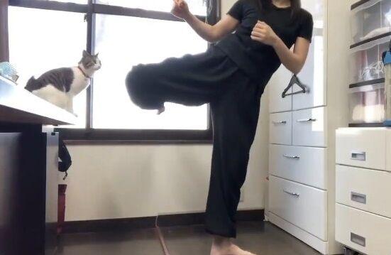 蹴り解説動画 猫乱入 癒やしに関連した画像-05