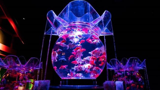金魚 アートアクアリウム 病気 虐待に関連した画像-01