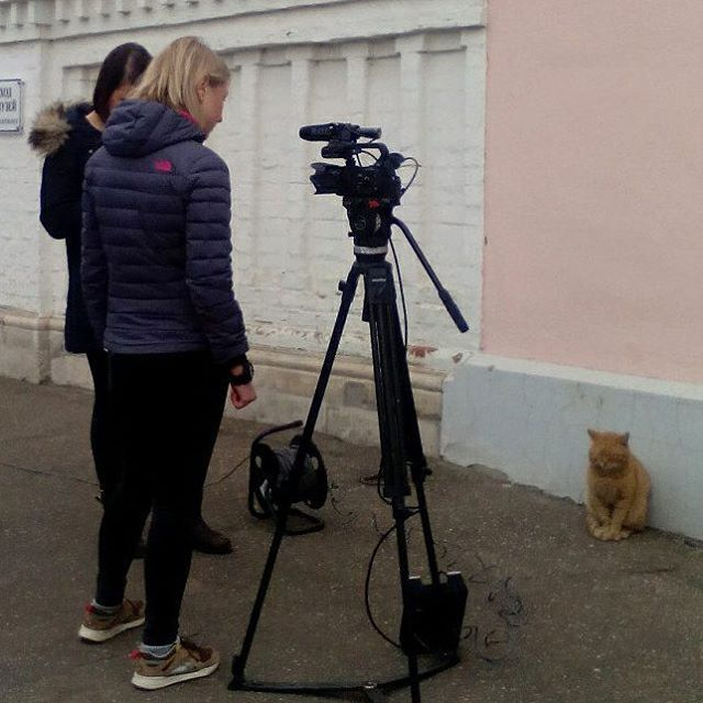 エイプリルフール 猫 従業員 本当 美術館 ロシアに関連した画像-05