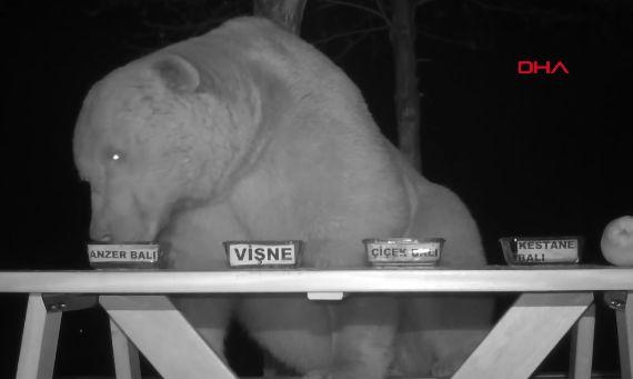 クマ 熊 対策 養蜂家 逆転 発送 に関連した画像-01