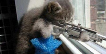 猫 銃 ライフル 警察 木の枝に関連した画像-01