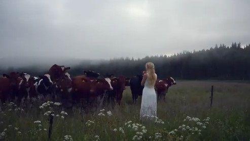 キュールニング 牛 交尾に関連した画像-06