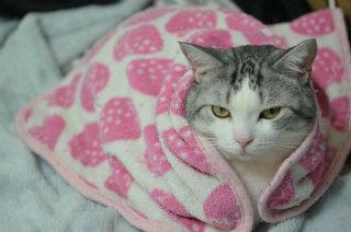 毛布に関連した画像-01