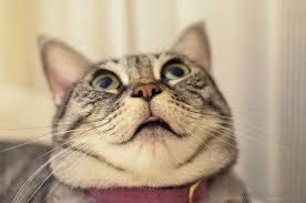 猫 スイス 食文化 動物愛護団体に関連した画像-01