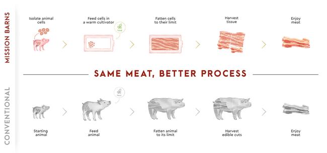 豚 人工ベーコン 培養に関連した画像-03