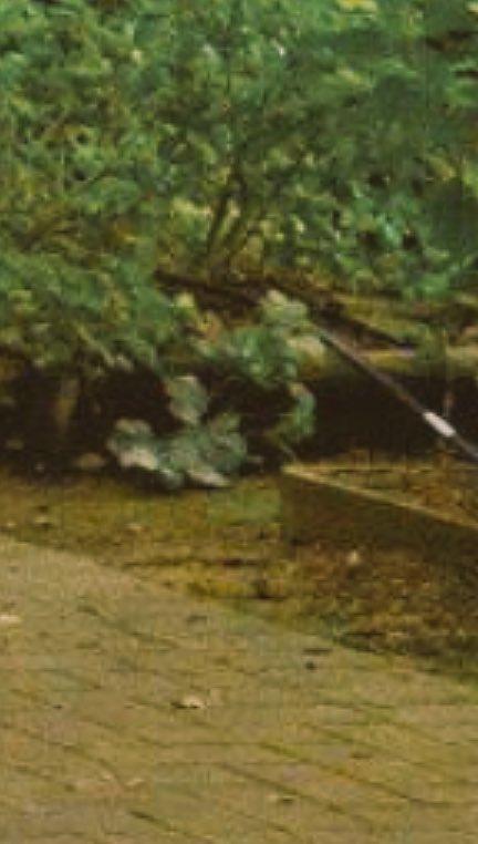実写映画 実写 鋼の錬金術師 ハガレン コスプレ 日本 排水溝に関連した画像-06