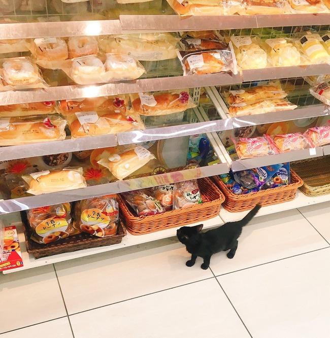 会計 レジ 黒猫 子猫に関連した画像-03