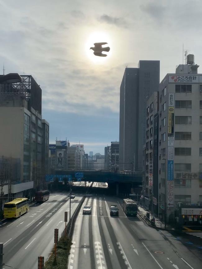 新橋駅 鳥 神々しい写真に関連した画像-02