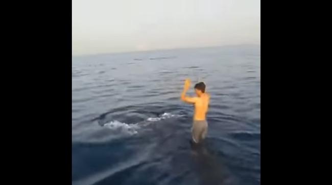 ジンベエザメ ジャンプ 非難殺到に関連した画像-01