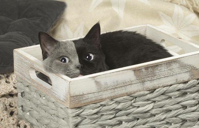 猫 グレー 黒に関連した画像-03