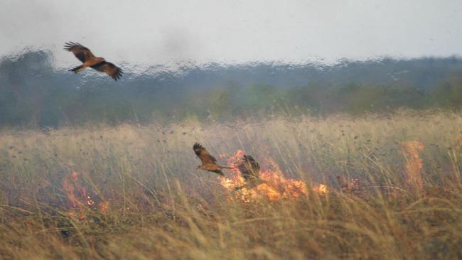鳥 狩り 火に関連した画像-01
