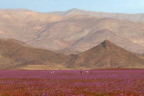 チリ アタカマ砂漠 砂漠に関連した画像-01