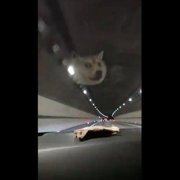 柴犬ポーチ ダッシュボード HUDに関連した画像-04