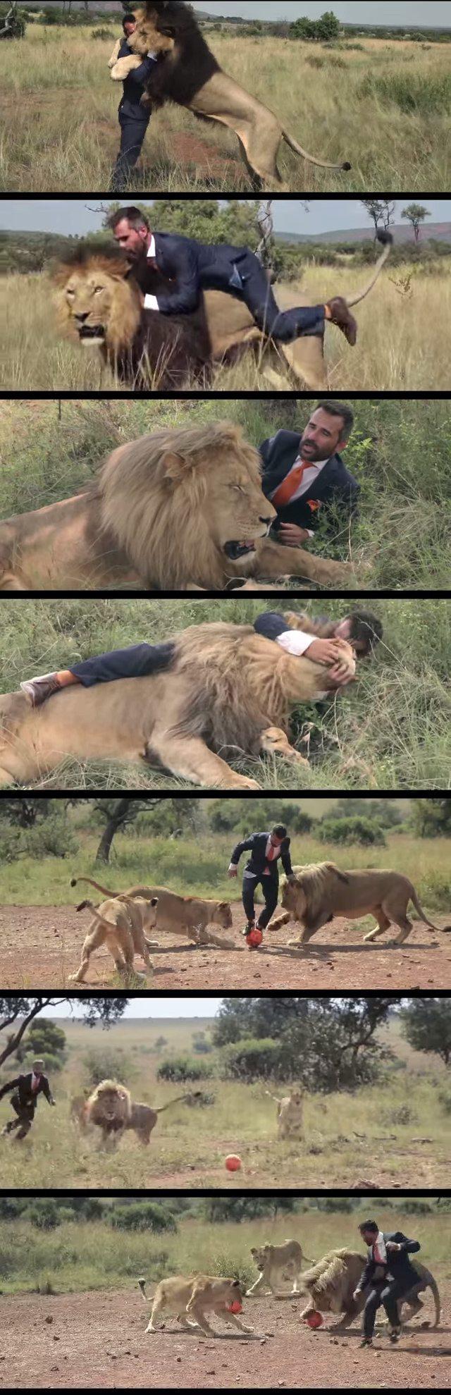 ライオン 紳士に関連した画像-03