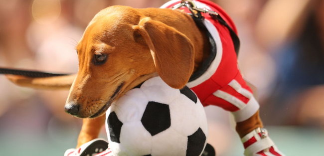 サッカー アルゼンチン 犬 キーパーに関連した画像-01