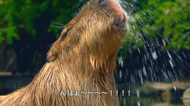 大塚明夫 声優 BL カピバラさん 動画 Youtube LIXIL MADEに関連した画像-07
