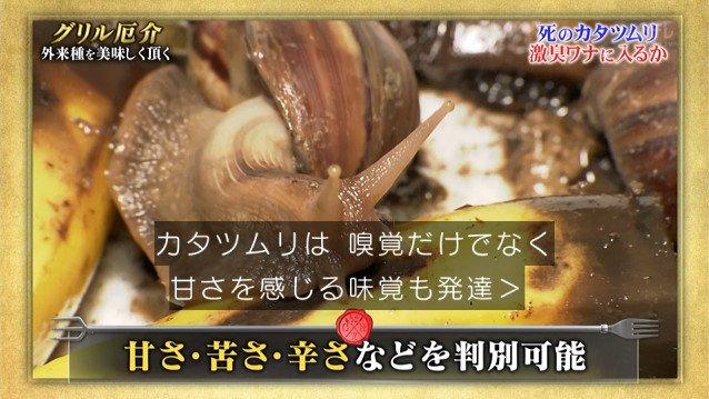 TOKIO カタツムリ 鉄腕ダッシュに関連した画像-09