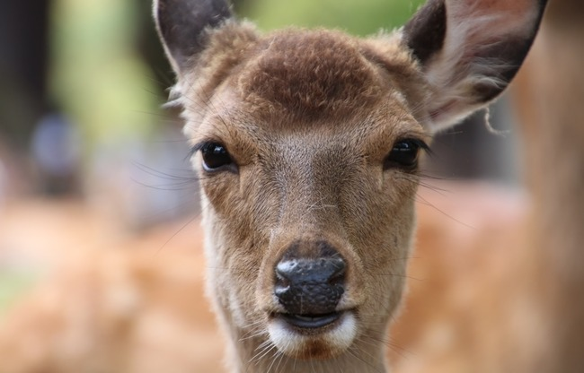 奈良の鹿 胃 ポリ袋に関連した画像-01