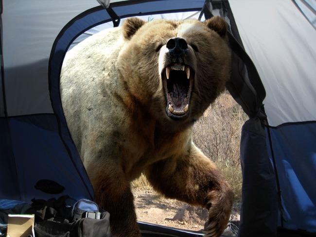 クマ 畑 撃退方法に関連した画像-01
