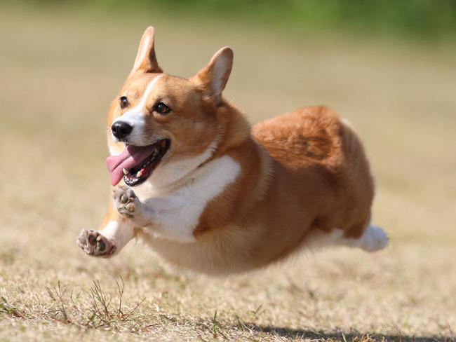 犬 ペット 健康 精神に関連した画像-01