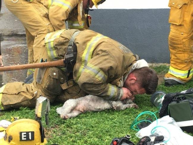 犬 人工呼吸 消防士に関連した画像-04