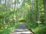 森g林g浴