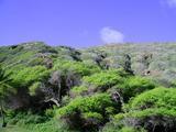 ハナウマ湾 岸側風景