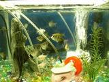 熱帯魚チャン
