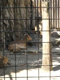 動物園のオリを消す撮り方