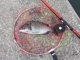 見えてた魚