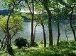 湖のミドリムシ