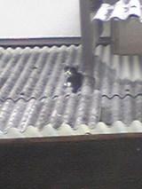 屋根の上のミイちゃん