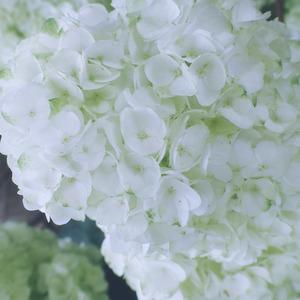 flor-8
