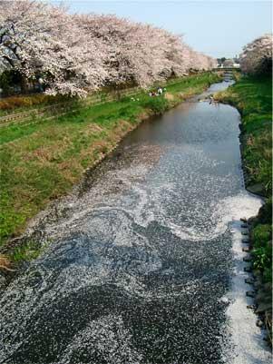 野川 川面1