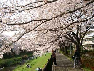 野川 遊歩道