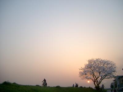 Sakura Final