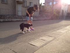散歩夕方2
