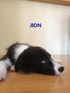 jiono0506