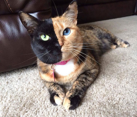 Meet-The-Most-Famous-Pet-Cats-On-The-Internet-9